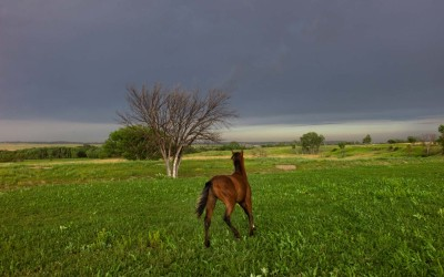 Horse in field after a storm, Oglala, Pine Ridge Reservation.  Historically, Lakotas were masterful in their horsemanship in battle and while hunting buffalo on the Great Plains.  Horses still have much importance in Lakota life across the reservation today.