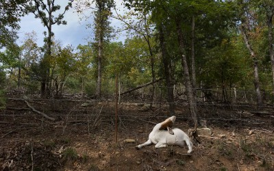 Madison County, Arkansas: Goats can still be found walking on a dirt road in deeply rural Madison County. Local deputy sheriff Captain Robert Boyd admits he fields calls about goats and chickens trespassing in neighbors' yards.