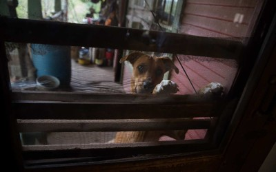 Madison County, Arkansas:  Maeve Courteau's dog, Annie, smells breakfast and hopes to be let inside.