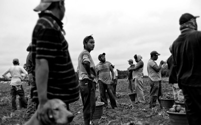 Kinston, North Carolina.September 2011. After clearing a field pickers take a break. Sweet potato pickers load trucks with potatoes as they pick through a field. The workers get paid for each bushel which earned them $.40 per bushel and a bushel weighs about 35 to 40  pounds.  Workers earn about $48 to $60 per day after picking through a field.  Some of the workers are as young as 18 and as old as 70.
