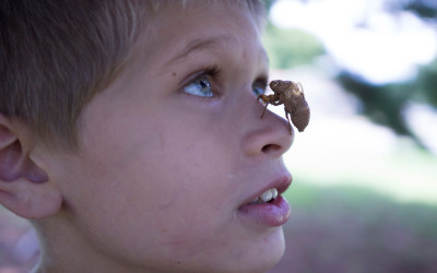 James and a cicada. Between 3 and 10 million children will witness domestic violence in this country this year.